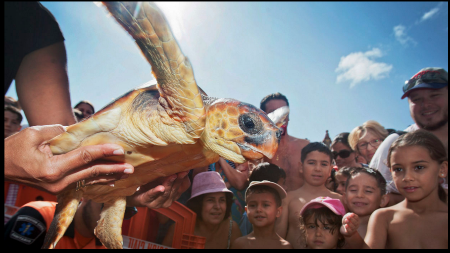 Tortuga-bobaAFP-PHOTO-DESIREE-MARTIN